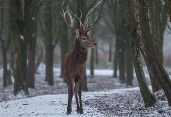 Red Deer Europe