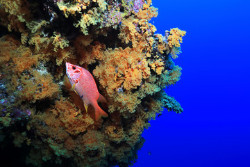 Wall Mural - Great Barrier Reef