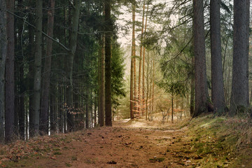 Small forest road