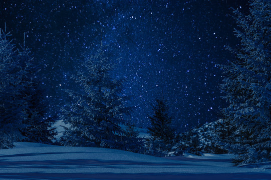Snow covered trees on a clear night