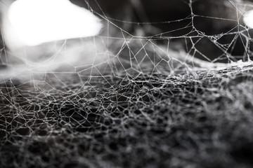 Web, cobweb or spiderweb with thread fibre structure