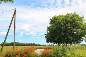 Panorama of the holiday island Ruegen in spring with poppies