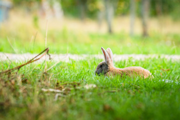 Rabbit relaxing in fresh green grass in the spring