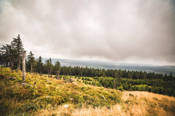 Pine tree forest on a hillside in misty cloudy weather