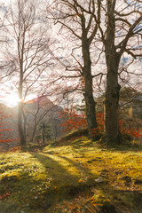 Idyllic landscape, timberland, outdoors