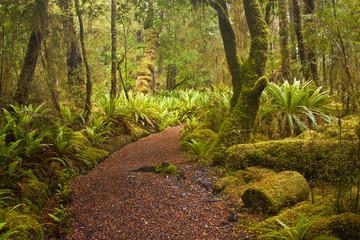 Beginning of Kepler track in fern forest in New Zealand