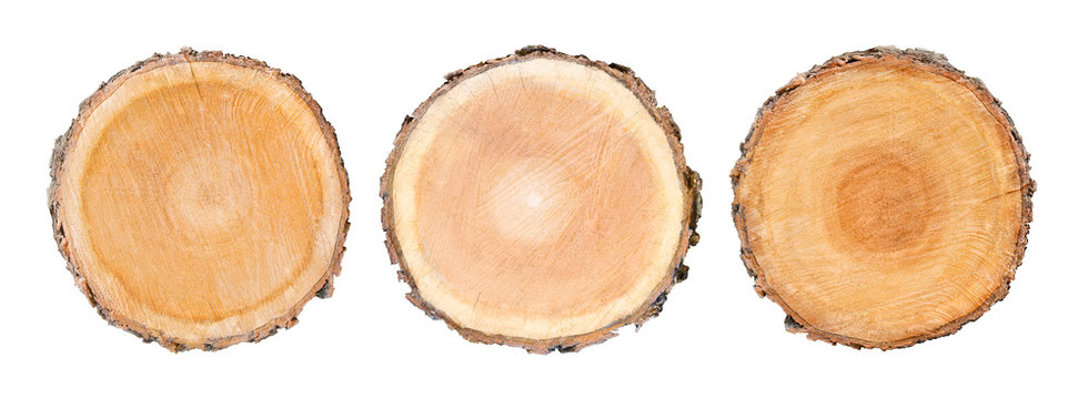 Set of three big tree trunks cut from the woods. Textured surface with rings and cracks. Neutral background made of hardwood from the forest.