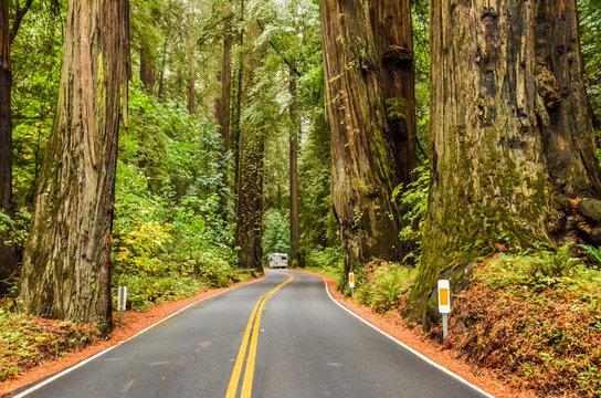 Avenue of the Giants Kalifornien USA