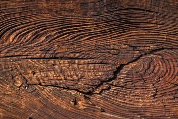 Fototapeta Tekstura starego drzewa obraz