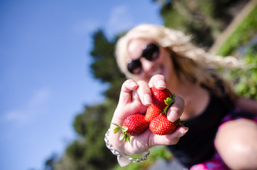 Artistic angle of a female picking strawberries from a farm field. Focus on the strawberries, intentionally blurred woman in background