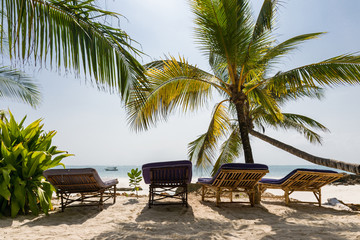 A line of sun loungers face the Indian ocean with palm trees giving shade in early morning light, Diani, Kenya Wall mural