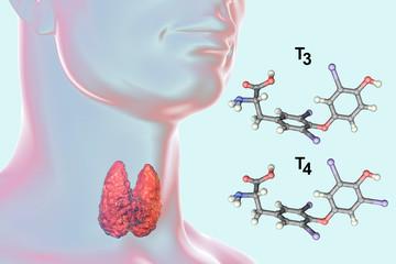 Fototapeta Molecules of thyroid hormones T3 and T4. Triiodothyronine and thyroxine, 3D illustration obraz