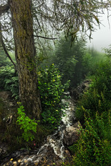 Little Mountainstream in the fog