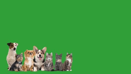 Wall Mural - set of puppies and kittens on a green screen