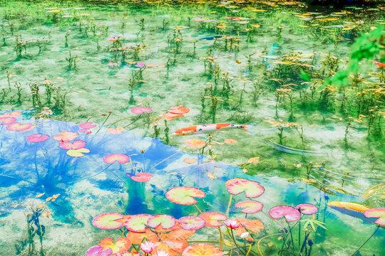 モネの池6