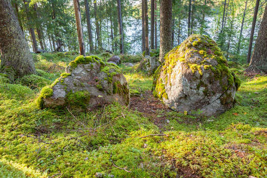 Big rock in forest nature landscape