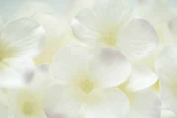white flower on a background