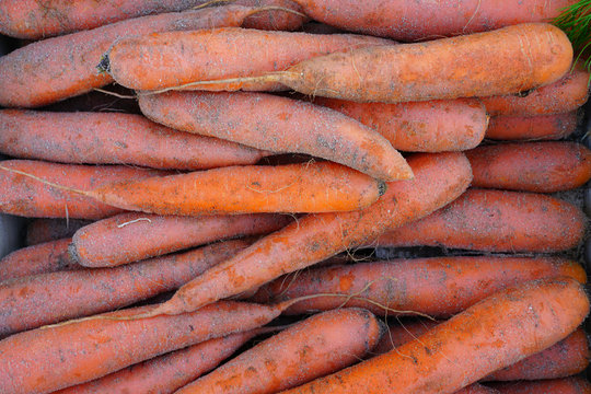 Fresh organic carrots with soil for sale at a farmers market