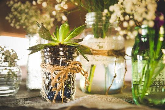 succulent in mason jar