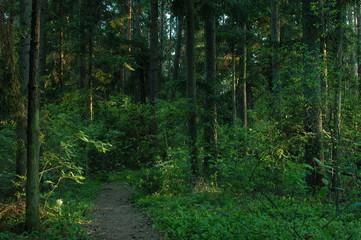 Obraz Roztoczanski Park Narodowy - fototapety do salonu