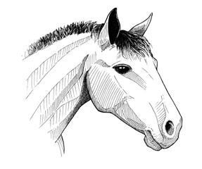 horse head, ink vintage hand drawn illustration