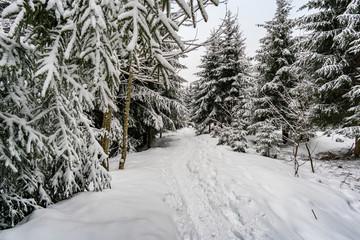 Schwarzer Grat im Winter