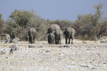 Elefanten von hinten