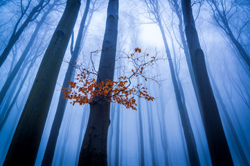 Mysterious morning forest