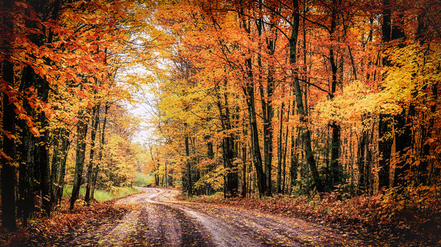 Forest Drive in Autumn. The Covered Road in Houghton County, Michigan. Seasonal background with copy space.