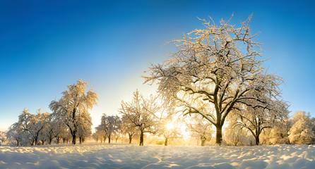 Verzauberte Landschaft im Winter
