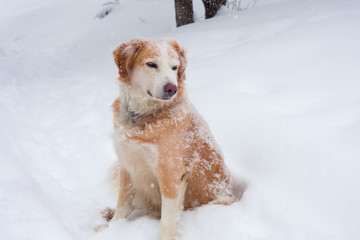 Dog with snow flakes on head and nose