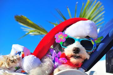 funny christmas dog with sunglasses Wall mural