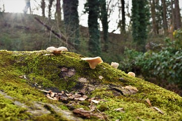 Fungi in the Forest 5