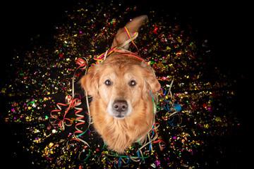 Neujahrs Hund