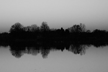 Black and White Tree Reflections