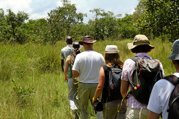 People walking in a line through the forest on safari