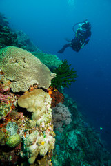 Dive Halmahera Maluku Scuba Bali Bunaken