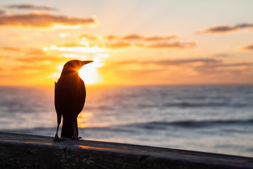 Wall Mural - Sea Bird sitting on a wooden pier by the ocean during a vibrant cloudy sunrise. Taken in Daytona Beach, Florida, United States.