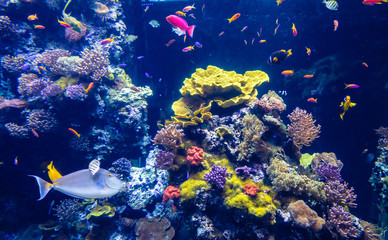Clear underwater with tropical colour fish and coral reef