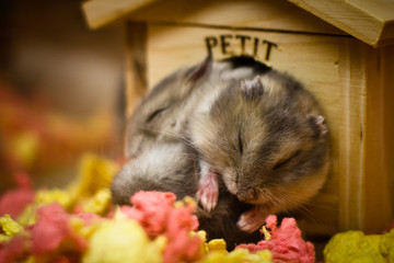 A group of cute adorable hamsters crowd around inside a small tiny house. This is very warming and touching to watch.