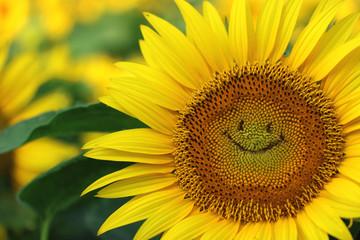 ヒマワリ畑 ヒマワリの笑顔