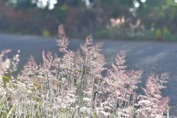 Background with weeds and magic of light at dawn in the autumn, colorful picture use for design advertising, printing and more