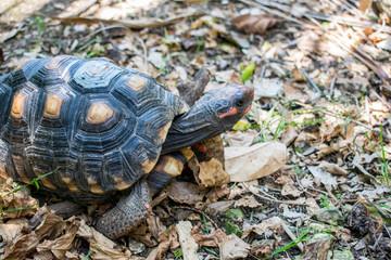 turtle on grass