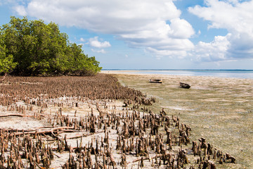 Landscape of Mafia Island at low tide with the mangrove uncovered and a cloudy blue sky.