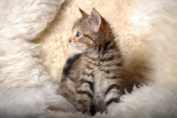 cute striped kitten on a light background