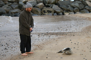 Friendly encounter man and grey cute seal pup on a Norfolk beach in Winter, the creature alone on the sandy shore of the ocean with rocks in background and man standing in warm coat smiling at animal
