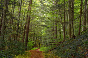 Fototapeten Wald Black Forest
