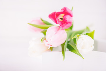 Delicate colored tulips on a white background. Spring time, copy space
