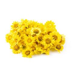 Yellow Chrysanthemum flowers isolated on white background