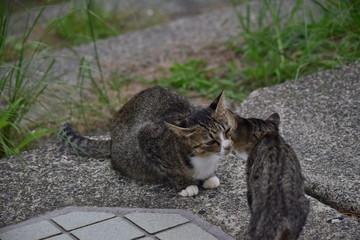 野良猫~Stray cats.